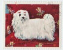 SHARJAH & Dependencies Bichon Maltese 25DH.jpg