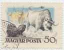 174 Magyar Posta Puli 50f 1956 First Hungarian stamp with dog.jpg
