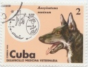 185 Cuba German Sheapear 1975 Ancylosoma caninum Hookworms In Dogs.jpg
