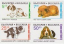 226 Bulgaria puppies k.jpg